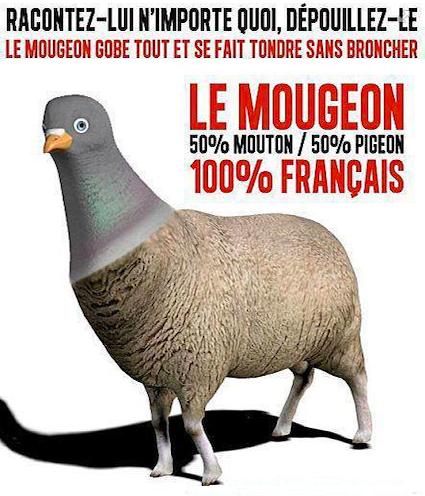 Le-mougeon-moitie-pigeon-moitie-mouton