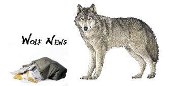 wolf news 2